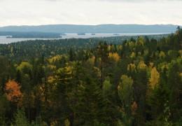 Skog, Silvaskog